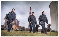 So trainieren Polizeihunde!