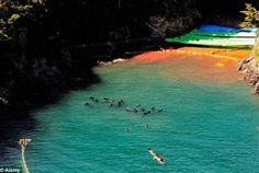 Screams from dolphins and staining of the Cove with blood. A nightmare from hell again!