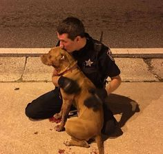 Cop Comforts Pit Bulls Who Were Abandoned On The Street