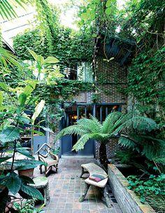 Jardin exotique composé de fougères arborescentes de Tasmanie, palmiers, figuier, dattier, néflier, gardénia, des plantes qui s'épanouissent avec peu de lumière.