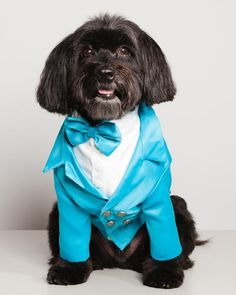 7 | New York's Most Extravagantly Dressed Dogs | Co.Design | business + design