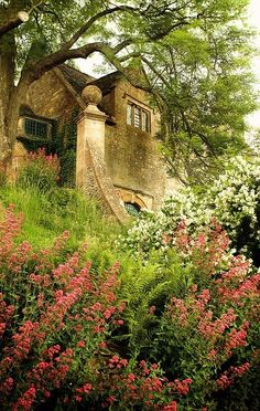 Cotswolds, love the red flowers, Keys of Heaven, have tried them in my garden, but not the right climate or soil.