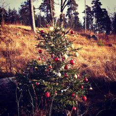 Christmas decoration, Forest art, Sun,