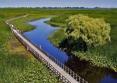Marsh Boardwalk, Point Pelee Provincial Park, Leamington, ON. Beautiful hotspot walk for birds, fish & turtles. Canada National Parks, Parks Canada, Wonderful Places, Beautiful Places, Ontario Parks, Capital Of Canada, Ontario Travel, Algonquin Park, Canada Travel