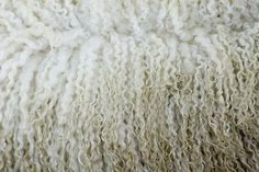Nice Wool photos -Check out these wool images: Sheep's Wool 354 (Free Texture) Image by shallowend Straight out of the camera. A free texture for your use. If you use this, please credit your source. (No sheep was harmed in the cre Sheep Breeds, Hair Boutique, Photography Articles, Spinning Yarn, Cheap Carpet Runners, Wool Carpet, White Image, Illustrations, Mood
