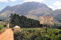 Thelema< Stellenbosch