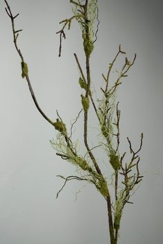 """@Lynn Iversen. These would be gorgeous coming up out of floral arrangements.  Maybe two arrangements at the entry into the barn? 55"""" Mossy Branches (artificial) $6.89 each / 6 for $5.99"""