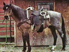 brown quarter horses for sale   Ruano Rojo ~ Red Roan Quarter Horse Stallion Son of Blue Valentine