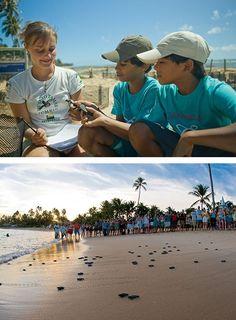 Projeto Tamar - Praia do Forte - BA - cercado de incubação de ninhos e soltura de filhotes na praia do portinho.