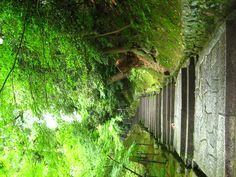 mysterious, Chion-In, Kyoto, Japan