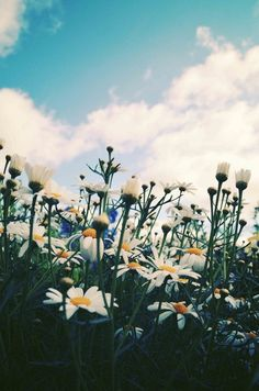 Don't forget to stop and play amongst the daisies