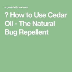 ▷ How to Use Cedar Oil - The Natural Bug Repellent Stink Bug Repellent, Natural Tick Repellent, Tick Repellant, Cedar Essential Oil, Essential Oil Spray, Essential Oils, Cedar Oil, Stink Bugs, Tomato Plants