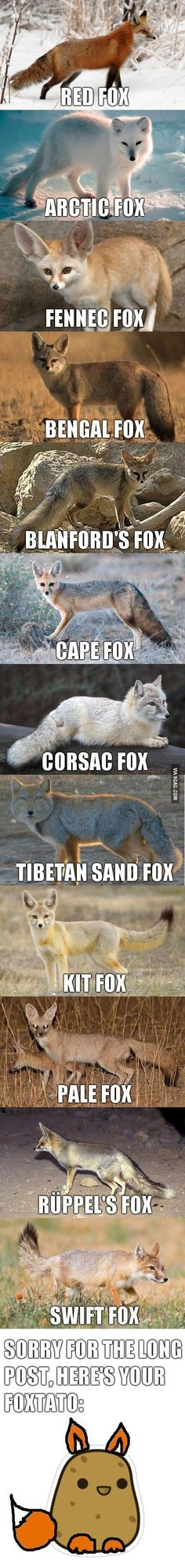 Different Types of Foxes in The World