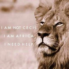 Remembering cecil the lion