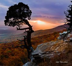 Juniper Sunset - Mount Magazine State Park, Arkansas
