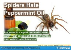 Spiders - Spiders Hate Peppermint Oil
