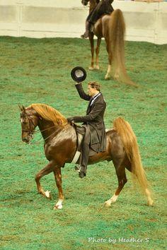 Marc Of Charm, Saddlebred stallion at the 2014 World's Championship Horse Show