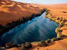 An oasis in the Sahara desert.