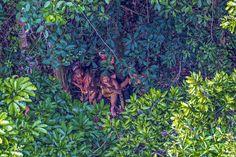 Brasile, frecce contro l'elicottero: le foto della tribù isolata mai entrata in contatto con il nostro mondo