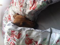 My baby Roo..