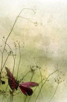 Butterfly ✿⊱╮.