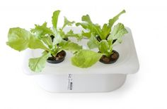 DIY Hydroponic devices you can make from items found at IKEA