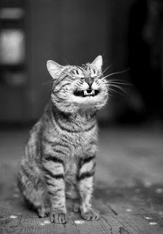 laugh !!!