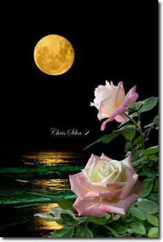 By Artist Unknown. Beautiful Moon, Beautiful Roses, Book Cover Background, Moon Pictures, Science And Nature, Amazing Nature, Night Skies, Moonlight, Beautiful Pictures