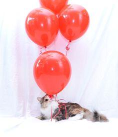 Jinx's photo shoot, happy birthday!