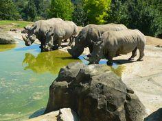 Rhinocéros photographiés au ZooParc de Beauval
