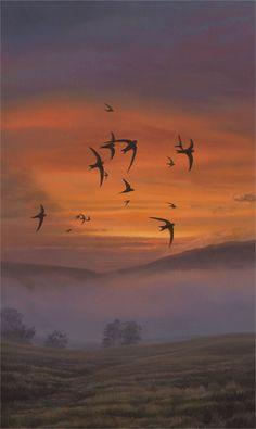 Swifts on a summer evening ~ Martin Ridley