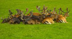Photo by Ivana Piskáčková Cattle, Mammals, Deer, Wildlife, Cow, Reindeer