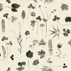 Eco Wallpaper Simplicity Botanica