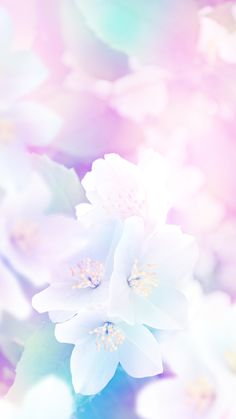 Ideas For Flowers Pastell Wallpaper Pastell Wallpaper, Frühling Wallpaper, Pastel Iphone Wallpaper, Spring Wallpaper, Flower Wallpaper, Wallpaper Backgrounds, Iphone Wallpapers, Instagram Png, Iphone Hintegründe