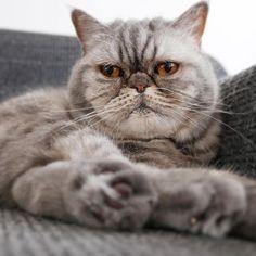 Happy #Caturday #WorldCatsday #WeltKatzenTag #internationalCatDay
