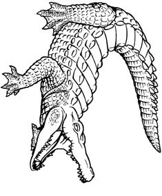 alligator coloring page #2 | alligators, tattoo and drawing tattoos - Alligator Clip Art Coloring Pages