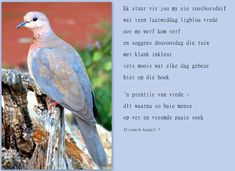 So baie duiwe in my tuin. Today Quotes, Afrikaans, Words, Faith, Album, Places, People, People Illustration, Afrikaans Language