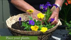 Create a Pansy Hanging Basket