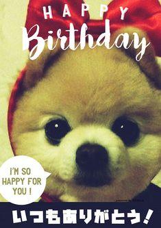 思わず笑顔になる犬のお誕生日画像