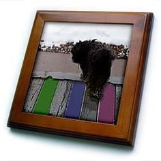 """An Adorable Shiatsu Lhasas Dog Walking Around on the Porch Outside with Rectangles - 8x8 Framed Tile by Jodie Fauxtographee. $22.99. Cherry Finish. Solid wood frame. Keyhole in the back of frame allows for easy hanging.. Dimensions: 8"""" H x 8"""" W x 1/2"""" D. Inset high gloss 6"""" x 6"""" ceramic tile.. An Adorable Shiatsu Lhasas Dog Walking Around on the Porch Outside with Rectangles Framed Tile is 8"""" x 8"""" with a 6"""" x 6"""" high gloss inset ceramic tile, surrounded by a solid wood ..."""