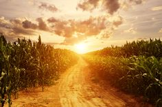 """The cornfields that once laughed at me now welcome me home."" #TheVanishingSparkofDusk #YA #SciFi #Romance #Novel #Book"