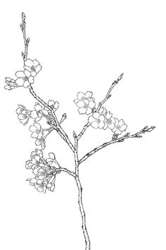 "Kleurplaat: ""Bloem-Plant-Dier"" *Colouring Picture ""Flower-Animal"" ~Kersenbloesem *Cherry blossom~"