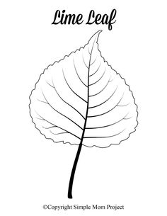 Free Printable Large Leaf Templates, Stencils and Patterns - Simple Mom Project Looking for an autumn leaf craft idea? Use these free large printable leaf cutout templates so spark your creativity! These fall leaf stencils make a perfect easy c Maple Leaf Template, Pumpkin Template, Leaf Coloring Page, Easy Coloring Pages, Fall Coloring, Heart Template, Flower Template, Crown Template, Printable Leaves