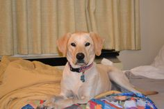 This is me at a pet friendly Motel 6.  Did you know all Motel 6 allow pets?  And we stay for free!  #motel6