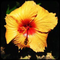 Awsome blossom #soulomotion #soultravels #outdoorgirl #adventuregirl #soulolution #mindful