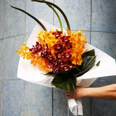 #PohoFlowers #Poho #Potts #Point #Sydney #Florist #Yellow #Orchid