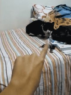 Dog in a former life. | 10 Funniest Cat GIFs Of TheWeek