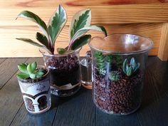 水耕栽培で観葉植物を育てられる「ハイドロカルチャー」を知ってますか? いま流行りのテラリウムも、ハイドロカルチ […]