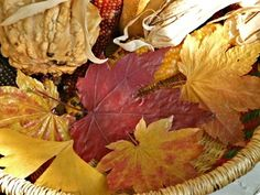 Use Mod Podge to save those beautiful red, yellow, orange and purple fall leaves for this year and the next and the next.