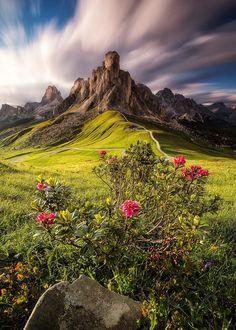 Alpenrose ~Nicholas Roemmelt